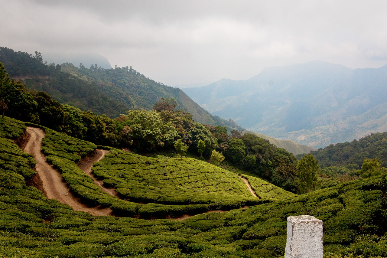 Home On The Range Munnar